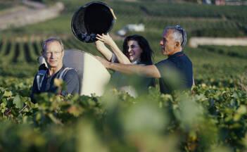 Take part in grape harvest 2020
