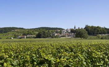 Wine Tours in Burgundy near Beaune