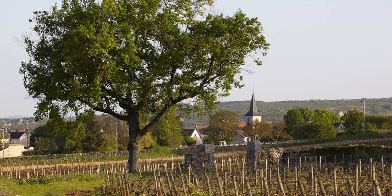 Vilarejo de Chassagne-Montrachet © Atelier photo Muzard