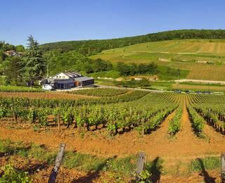 Os vinhos da Borgonha